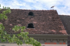 Storch-am-Dach